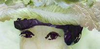 The Fantasies of Chinese Cabbage